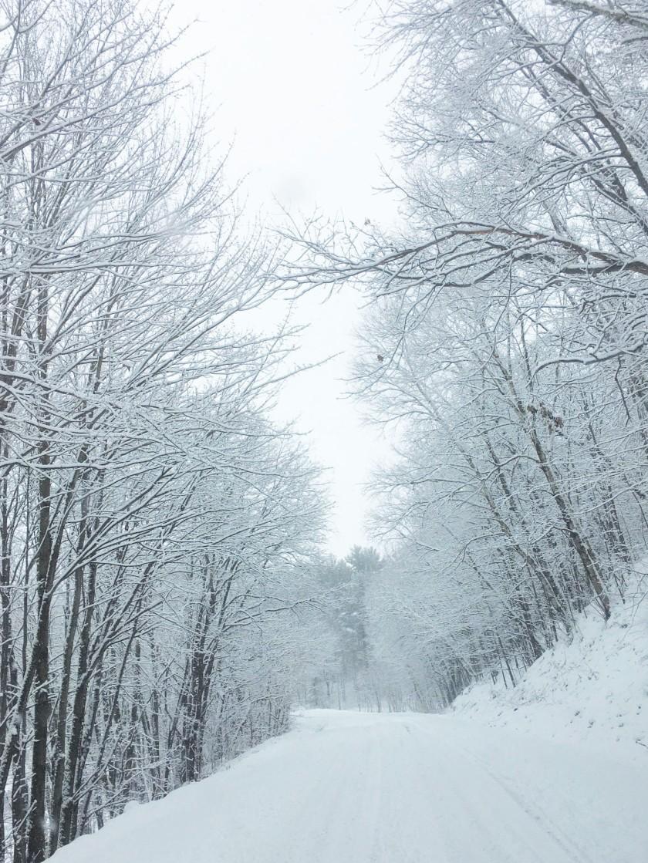 Snow leaves 123019